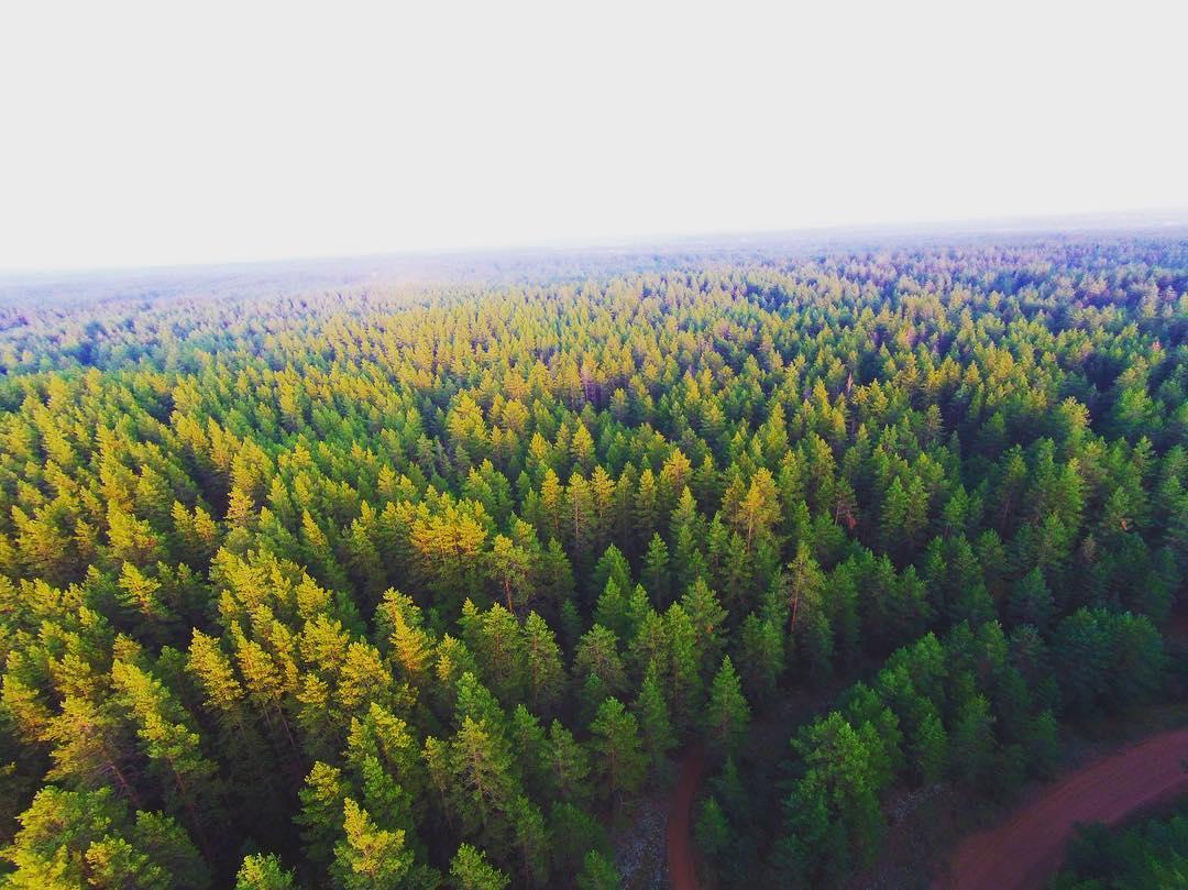 Buzuluk Forest